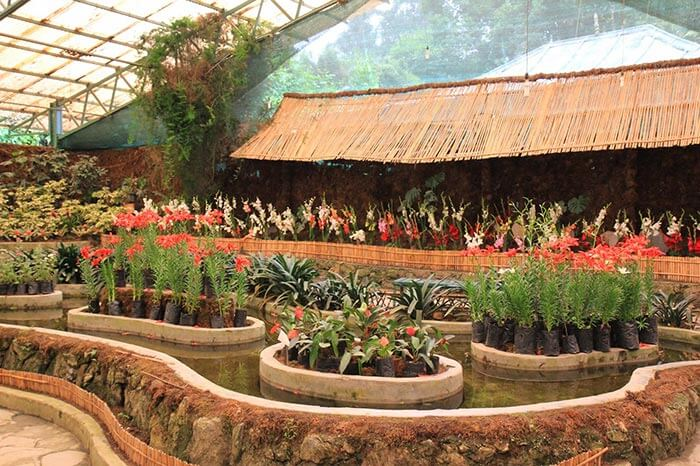 Beautiful flower display at Flower Exhibition Centre in Gangtok