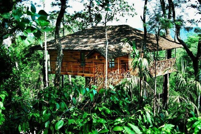 Get closer to nature while staying in a tree houses in Wayanad, Munnar, Kerala