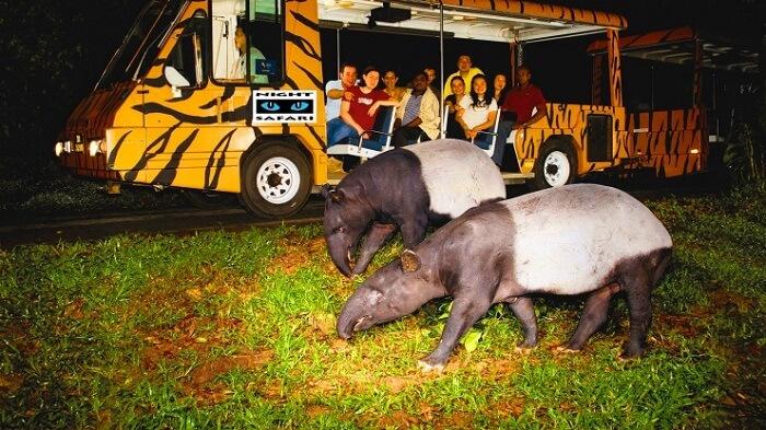 Resultado de imagem para imagens night safari em singapura