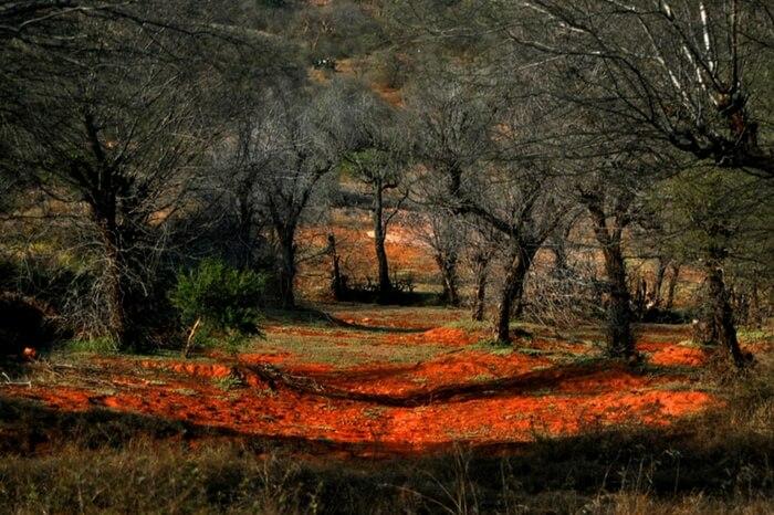 Densely vegetated Bakula region in the park