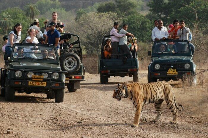 People enjoying the tiger safari in Ranthambore