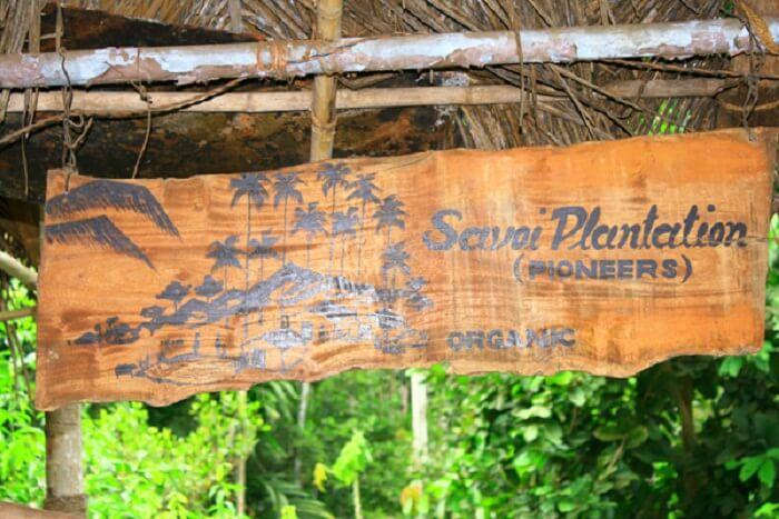 The famous savoi plantations of Goa