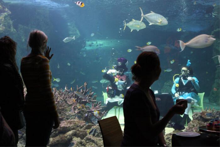 13,000 different sea creatures