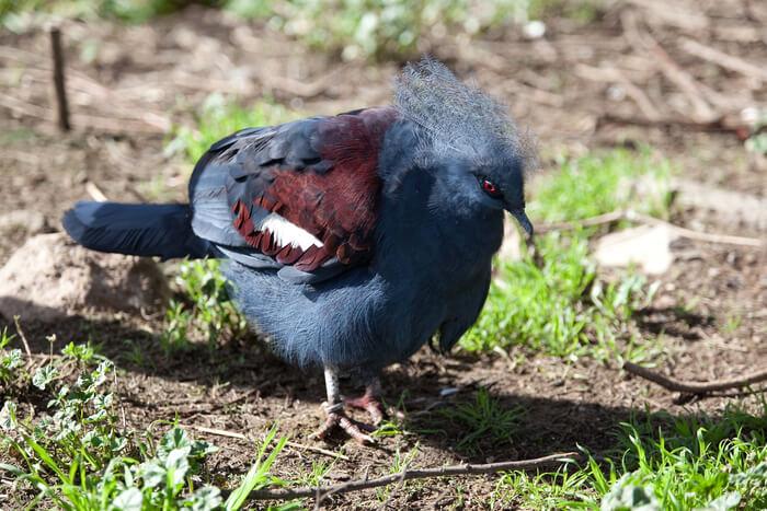 Unique beautiful bird