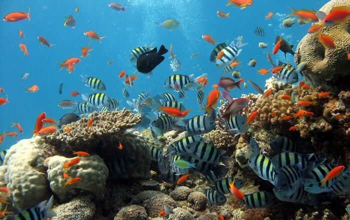Fishes in the seawater