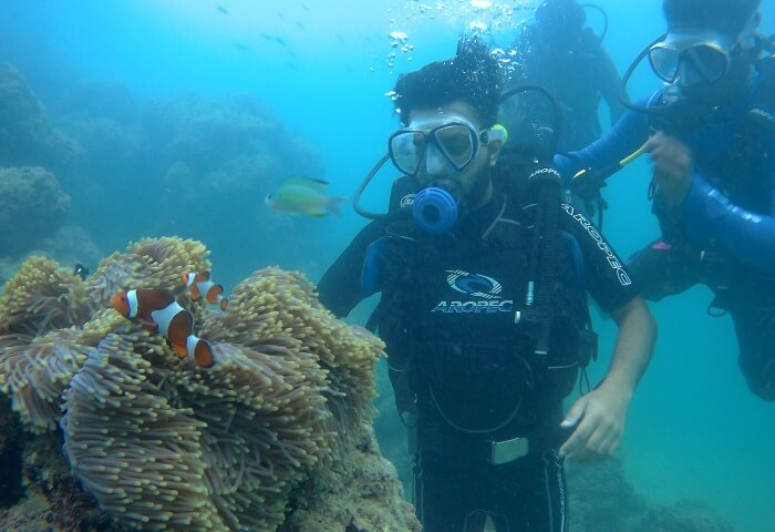 a closer glance at the marine life