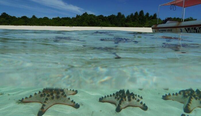 Starfish sland