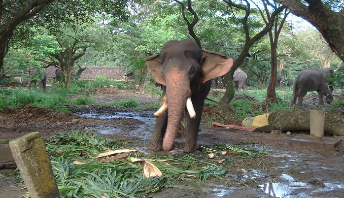 Elephant Camp Sanctuary