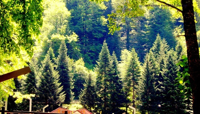 Amruthavana Nature Resort