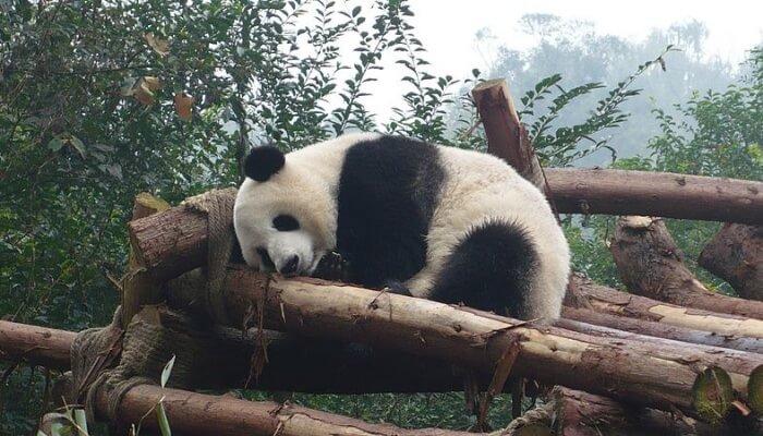 Chengdu Research